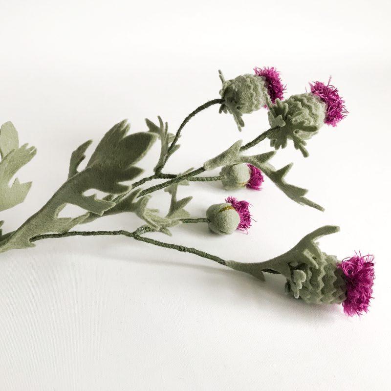 Distel plantje