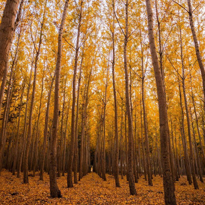 Trouwen in de herfst: een kleurrijk spektakel